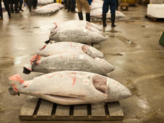 去东京最大的筑地市场看金枪鱼交易