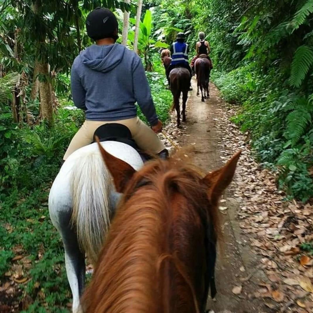 巴厘岛乌布骑马
