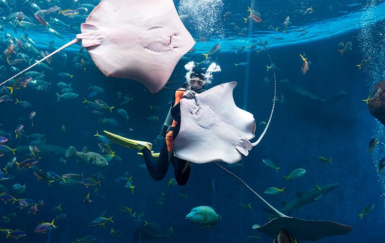 鸭川海洋世界看虎鲸表演+海萤岛观光
