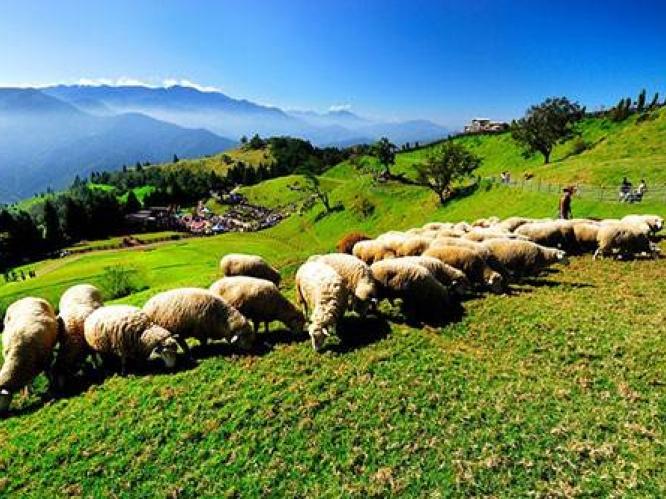 清境农场和孩子上演现实版《喜羊羊与灰太狼》